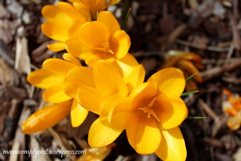 blogIMG_0535