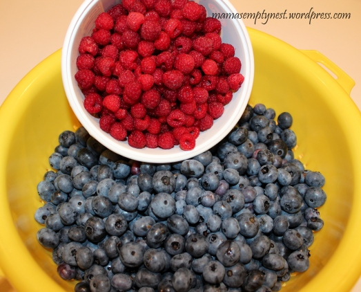 Freshly picked  red raspberries and blueberries straight from our bushes