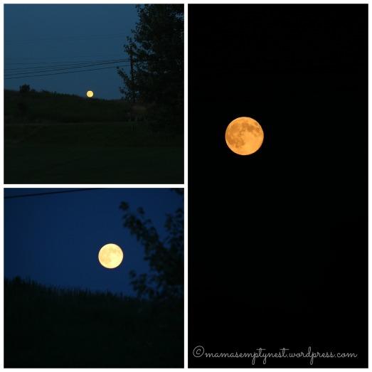blog moon collage