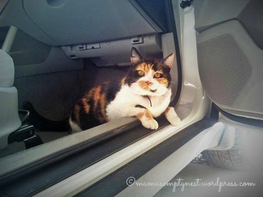 blogCallie in car