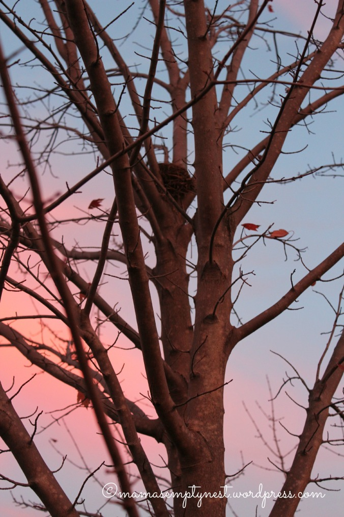 Empty nest at sunrise